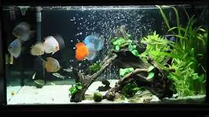 bedroom aquarium bed set fish tank headboard headboards bed