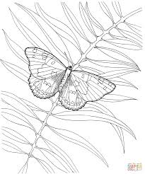 butterfly with a plant coloring page free printable coloring pages