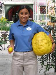 Living With The Land Epcot by Lots Of Lemon At The Land Epcot Living Laboratory Harvests Lemon