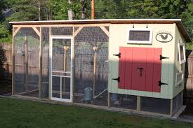 Small Backyard Chicken Coops by Chickens Squirrel Acorns