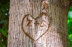 carving initials spells o u c h for a living tree s day