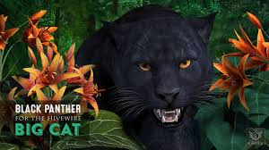 cwrw black panther for the hivewire big cat a cwrw creation at