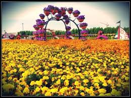 dubai flower garden archives pinay flying high london blog and