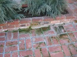 Moss Cleaner For Patios Cleaning How Do I Remove Moss From An Outdoor Brick Walkway