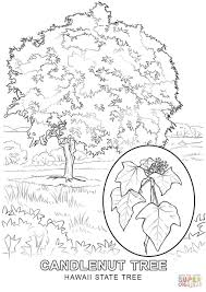 ohio state tree coloring page http how to draw co uk s o state