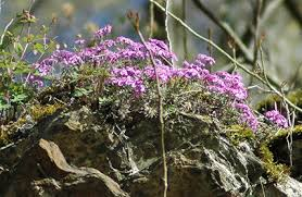 Flowering Shrubs New England - amc dvmaydelaware valley chapter appalachian mountain club