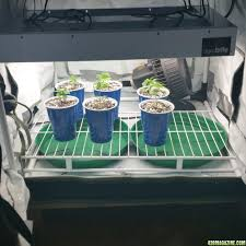 halloween cups and plates white widow halloween grow with 315 watt cmh light journal page 23