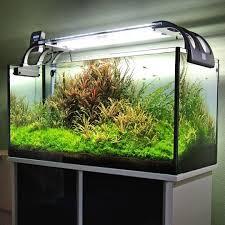 Aquascaping Tools 3929 Best Aquascapes Images On Pinterest Aquascaping Aquariums
