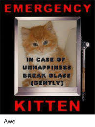 Awe Meme - emergency in case of unhappiness break glass gently kitten awe