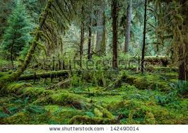 Deep Forest Green Deep Forest Trees Stock Images Royalty Free Images U0026 Vectors