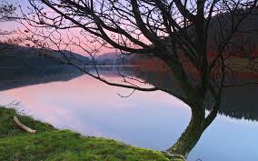 tree at derwent reservoir desktop wallpapers