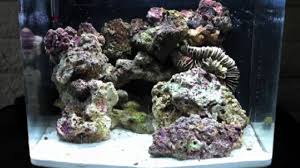 Reef Aquascape Designs Biocube 14 Gallon Aquascape Nano Saltwater Reef Tank Aquarium