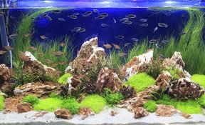 aquarium is water softener water safe for aquariums