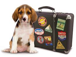 Traveling With Pets images Pet travel jpg
