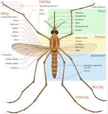 blog u2014 mighty mosquito control