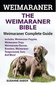 belgian sheepdog pros and cons belgian malinois and belgian shepherd belgian malinois and
