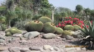 Cactus Garden Ideas Garden Ideas Cactus Rock Garden Ideas