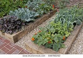 vegetable garden stock images royalty free images u0026 vectors