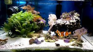 fluval edge marine light fluval edge 6 gallon saltwater reef tank youtube