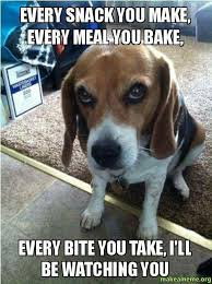 Dog Cooking Meme - mother s day 10 reasons being a pet mom is the best