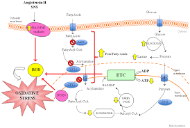 ijms free full text pathogenesis of chronic cardiorenal