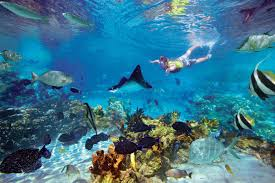 the best places for snorkeling in cancun and riviera aquaworld
