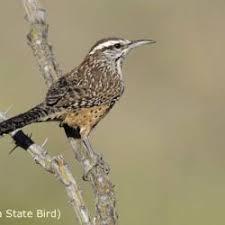 The Backyard Bird Company - backyard bird identification wren backyard ideas