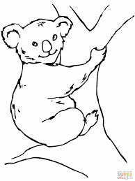 koala clipart coloring pencil and in color koala clipart coloring