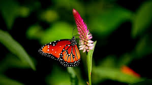 wallpaper 4k color butterfly nature animal forest color tree hdr ultrahd black white hd