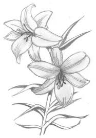 coloring lovely flower lily drawing tattoos lilies tattoo
