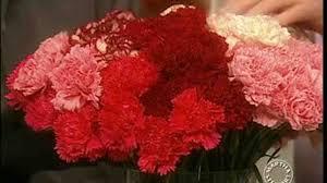video how to make carnation flower arrangements martha stewart