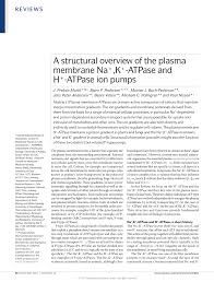 a structural overview of the plasma membrane na k atpase and h