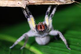 Spider Bro Meme - if your spider venom boner lasts more than four hours congrats on