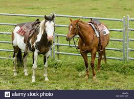 Horse Saddle by Horse Saddles Stock Photos U0026 Horse Saddles Stock Images Alamy