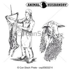 vector clip art of butcher cut up the carcass of a sheep hand
