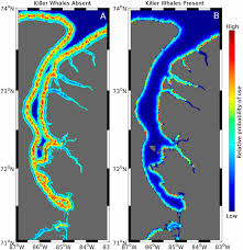 habitat si e social sustained disruption of narwhal habitat use and behavior in the