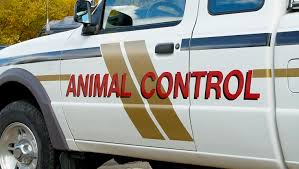 afghan hound urban dictionary 6 things animal control does that deserve our appreciation dogtime