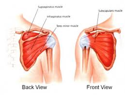 Front Of The Shoulder - rotator cuff tears in younger adults