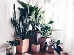 Wohnzimmer Einrichten Pflanzen Dekorative Pflanzen Fürs Wohnzimmer Kühl Auf Ideen Oder Wohnzimmer