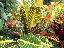 plant grow and care for common exotic u tropical green exotic low