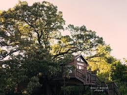 tree house treehouse mansion lofty lodge homeaway cottage grove