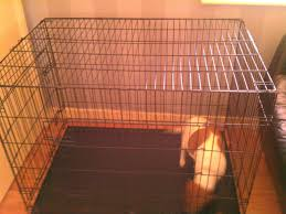 xl dog crate for sale dudley west midlands pets4homes