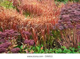 606 best ornamental grasses images on ornamental