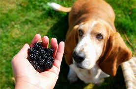 diabetic dog treats best food options for diabetic dogs petmd