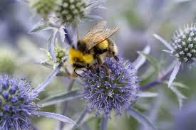Flowers Bees Pollinate - best plants for bees in pictures gardenersworld com