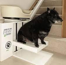 comment empecher mon chien de monter sur le canapé le merveilleux chien monte escalier