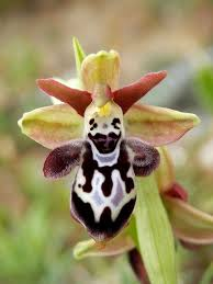 awesome looking flowers the 25 best strange flowers ideas on pinterest unusual flowers