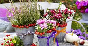 topfpflanzen balkon herbst pflanzen und deko für balkon und terrasse mein schöner