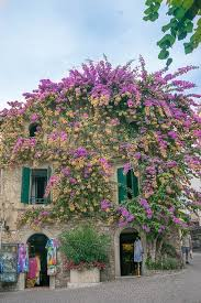flower house purple flower house domain free photos for