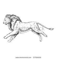 hand drawn sketch running lion retro stock vector 577816216